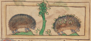 from the Northumberland bestiary